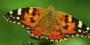 İda'nın Kelebekleri -165