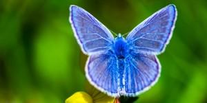 İda'nın Kelebekleri -172