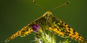 İda'nın Kelebekleri -174