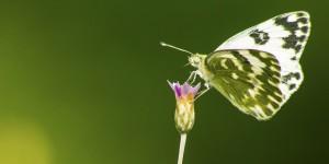 İda'nın Kelebekleri -166