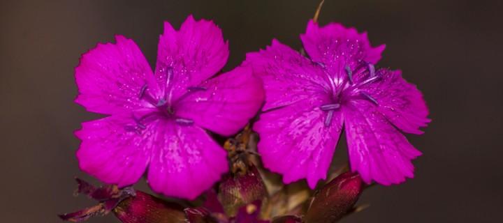 İda'nın Çiçekleri -201
