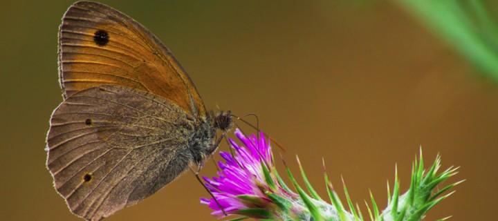 İda'nın Kelebekleri -168
