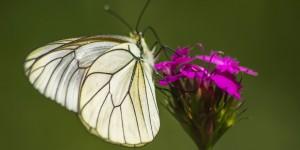 İda'nın Kelebekleri -169