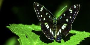 İda'nın Kelebekleri -170