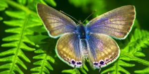 İda'nın Kelebekleri -171
