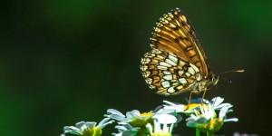 İda'nın Kelebekleri -173