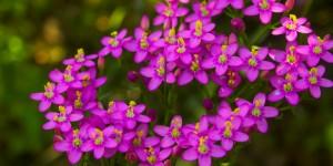 İda'nın Çiçekleri -207