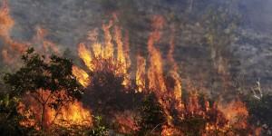 Orman Yangınlarına Dikkat!