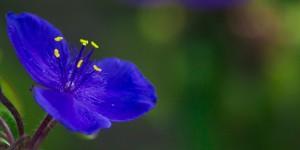 İda'nın Çiçekleri -210