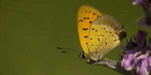 İda'nın Kelebekleri -176