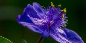İda'nın Çiçekleri -209