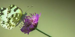 İda'nın Kelebekleri -181
