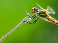 İda'nın Büyülü Canlıları -158