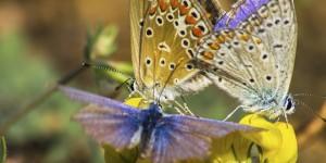 İda'nın Kelebekleri -183