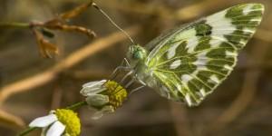 İda'nın Kelebekleri -177