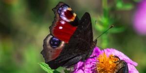 İda'nın Kelebekleri -178