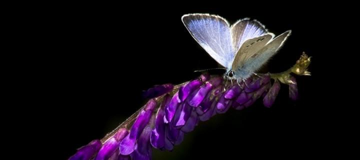 İda'nın Kelebekleri -179