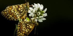 İda'nın Kelebekleri -180
