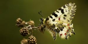 İda'nın Kelebekleri -175