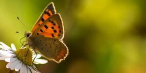İda'nın Kelebekleri -182