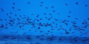 4 Eylül / Bıldırcın Geçimi Fırtınası (Poyraz Rüzgârları İle Karadeniz'e Göç)