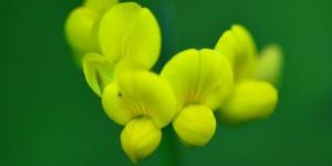 Yenice'nin Çiçekleri -192