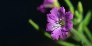 Yenice'nin Çiçekleri -193