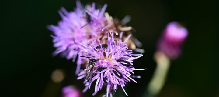 Yenice'nin Çiçekleri -205