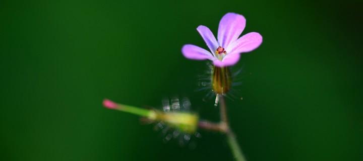 Yenice'nin Çiçekleri -211