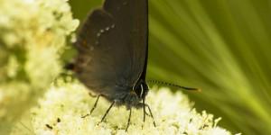 İda'nın Kelebekleri -184