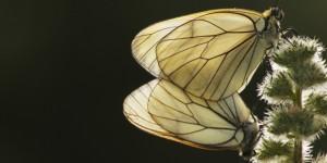 İda'nın Kelebekleri -188