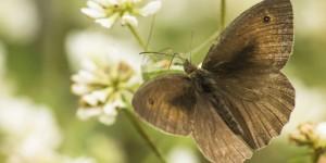 İda'nın Kelebekleri -190