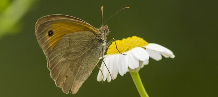 İda'nın Kelebekleri -191