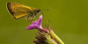İda'nın Kelebekleri -192