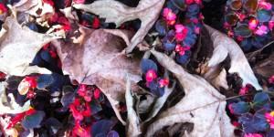 24 Eylül / Yaprak Dökümü