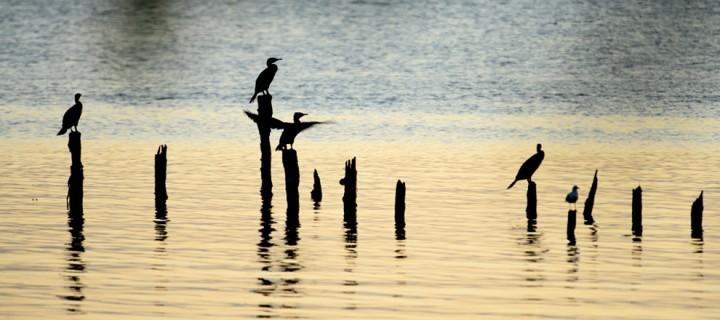 3 Ekim / Kuş Geçimi Fırtınası (Anadolu'daki Son Kuşların Göç Etme Dönemi)