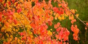 7 Ekim / Yaprak Dökümü Fırtınası (Doğanın Yaprak Dökerek Kışa Hazırlanma Dönemi)