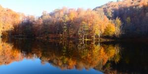 29 Kasım / Ülker Fırtınası. Ağaçlardan Suyun Çekilme Zamanı
