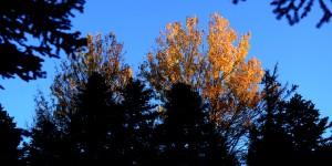 Uludağ'da Sonbahar -2