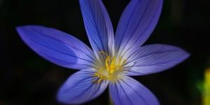 Yenice'nin Çiçekleri -220