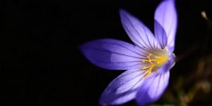 Yenice'nin Çiçekleri -221