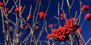 Kırmızı Yenicedir -7