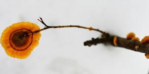 Yenice'nin Kış Mantarları -8