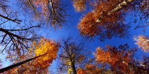 11 Aralık / Yaprak Dökümü Sonu