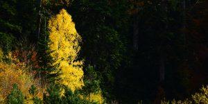 Yenice'nin Bitkileri -14