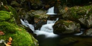 Doğa Yenicedir -159