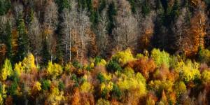 Doğa Yenicedir -158