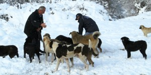 Kocaeli'de Sokak Hayvanları Aç Kalmıyor