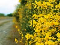 Mudanya-Bandırma Sahil Yolu: 126 km