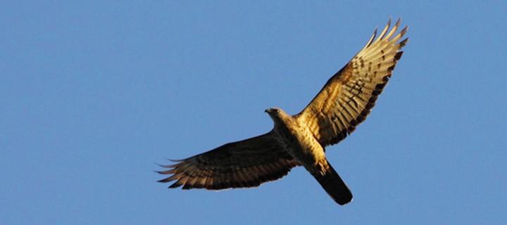 Cerattepe Maden Projesi Avrasya Kuş Göç Yollarını Tehdit Ediyor